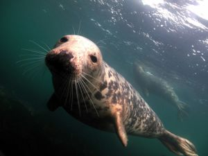 Seal on the Farne Islands